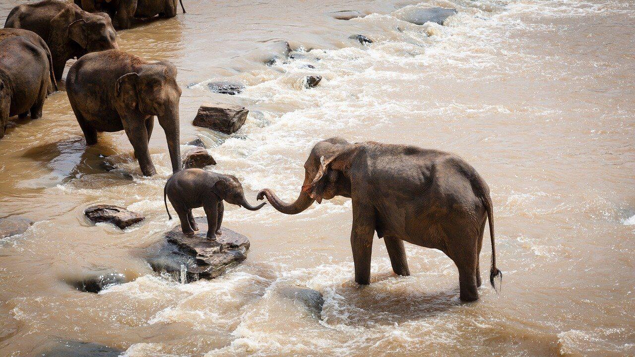 éléphant traversant rivière au Serengeti