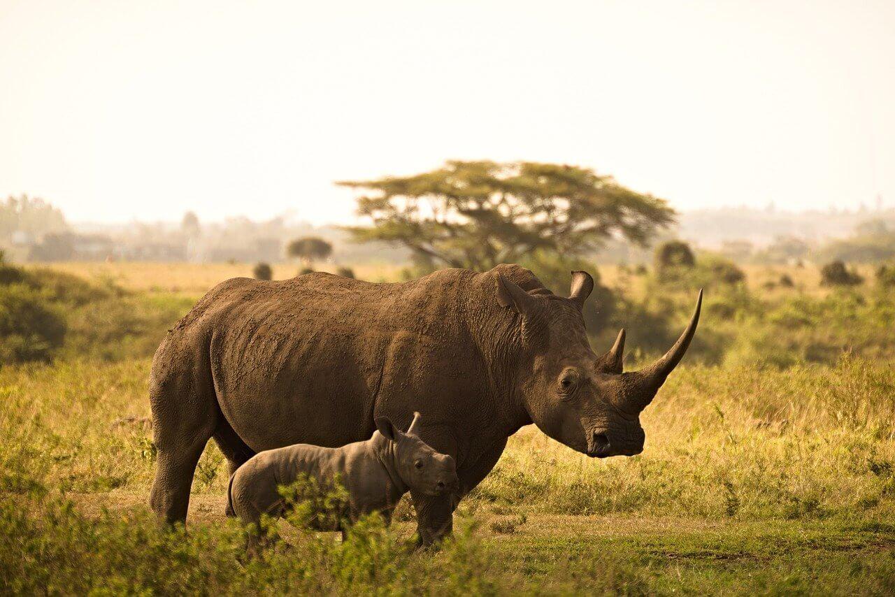 rhinocéros safari Serengeti